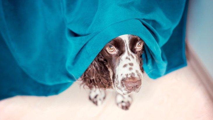 犬のメンタルが弱っている時する仕草や行動3選!適切な対処法は?