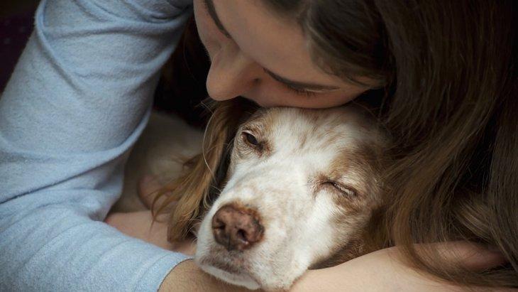 犬の元気がないのは病気?注意したい症状や原因について