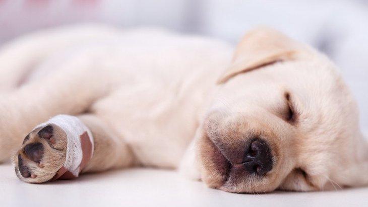 犬の水虫(たむし)とは?主な症状や原因、人へ移るルートについて