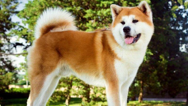 『初心者は飼うべきではない犬種』5選