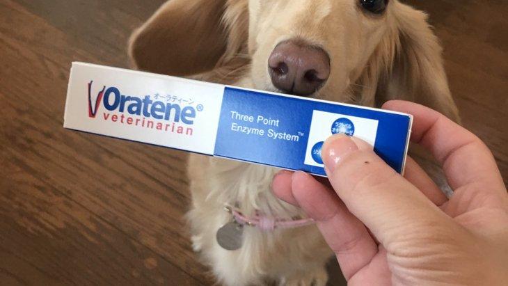 歯磨きの大切さ。「オーラティーン・デンタルジェル」で愛犬の口内環境を守ろう!