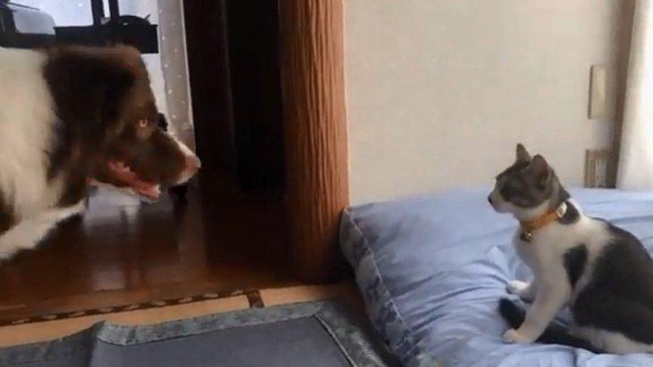 「そこは私のベッドですが」猫に取られてしまったイッヌさんの攻防戦