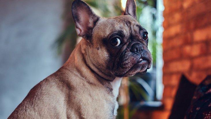 飼い主を信頼してない犬がする3つの仕草