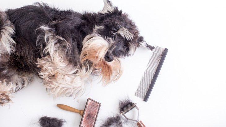 犬の抜け毛対策の悩みを解決!お手入れや掃除の方法、役立つ商品