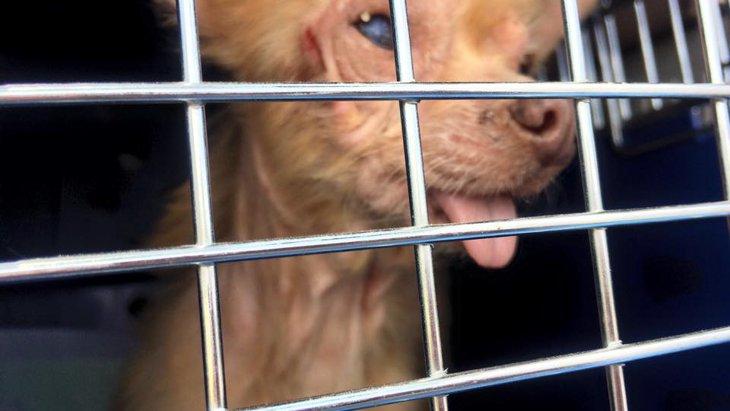ペットショップに展示された可愛い子犬たち~お母さんの存在を知ってください!
