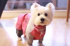 犬のレインコートの選び方と役割について