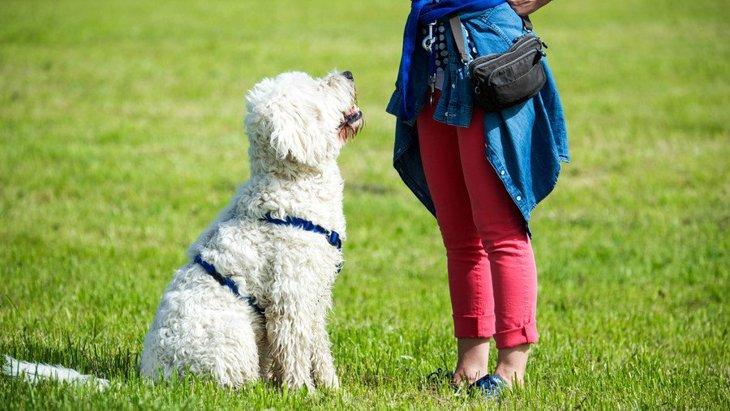 愛犬がお座り・待てを出来ない…『ジェスチャー』で解決できるかも!?