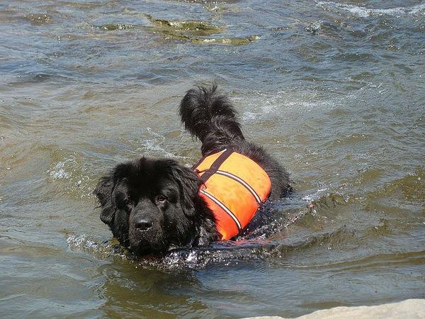 救助犬の災害現場での活動。犬の才能と訓練内容
