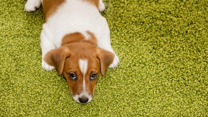 犬との生活に疲れてしまった時に。考えたい3つのこと
