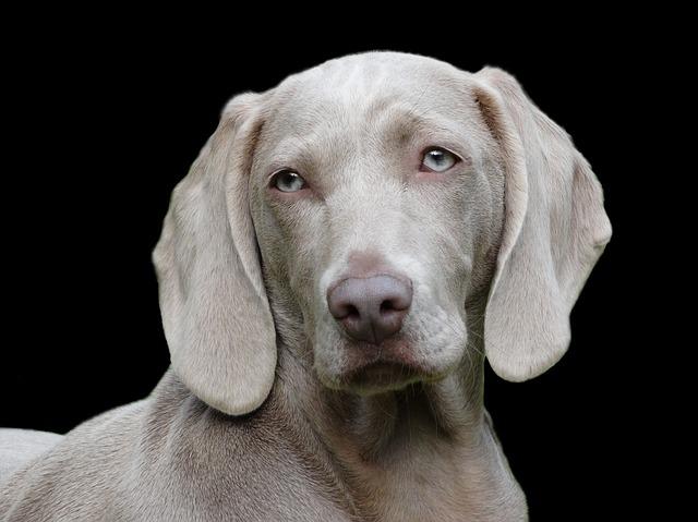 犬はあなたの行動をちゃんと記憶しているという科学的な証明が!