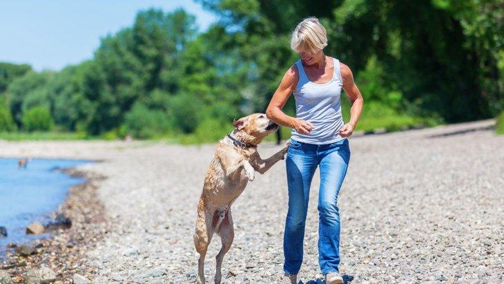 犬が飛び跳ねるときの心理とやめさせるしつけ方