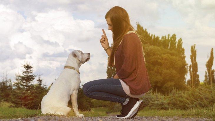 あなたはどう?犬が『言うことを聞いてくれる』飼い主の特徴3選