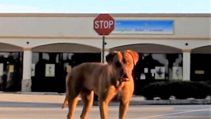 人を信じない成犬を時間、人手、お金をかけて保護!全ての犬にその価値がある