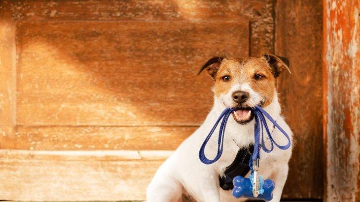 犬の散歩で必須な『5つのグッズ』 持っていかないと後悔するかも?