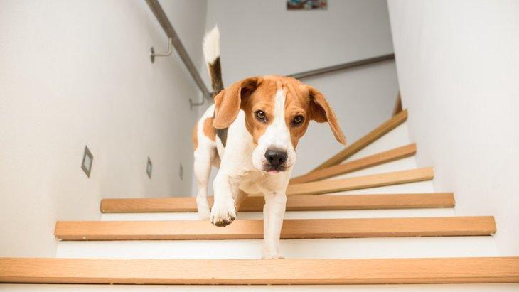 犬にとって階段が危険である理由2つ