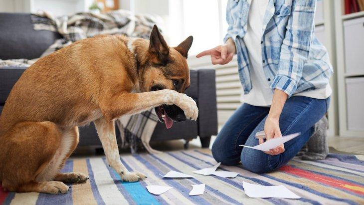 犬の態度が悪い時に考えられる理由5つ