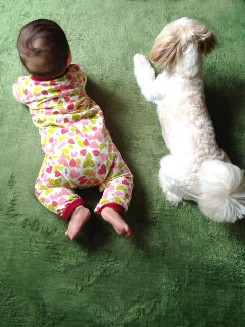 犬と赤ちゃんの同居生活