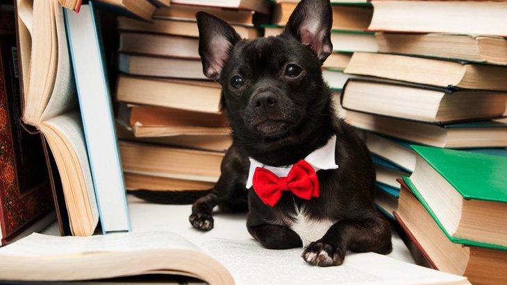 全部わかったら犬博士?犬の『雑学クイズ』3選