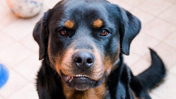 犬がわがままになる『NGな飼い方』5選