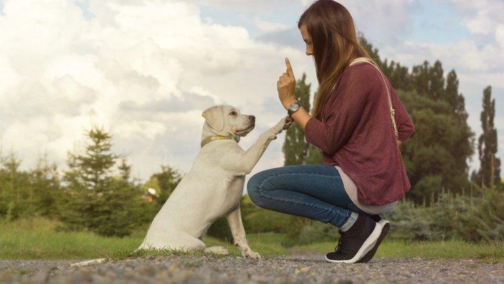 犬がしつけを忘れてしまう3つの原因とやりたい対策