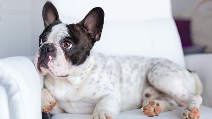 犬は『テレビ』を認識しているのか?