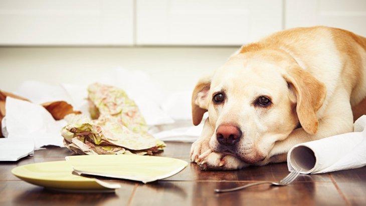 愛犬が留守番中にイタズラをする4つの理由と対処法