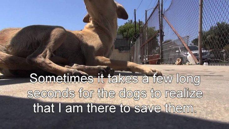 「あぁどうしよう…」警戒心ゼロの子犬たちと、ナーバスな母犬の保護
