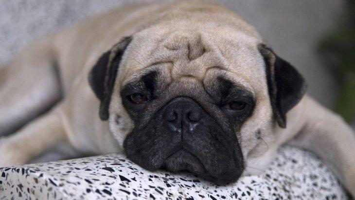 犬が「やる気のない態度」を見せる理由3つ