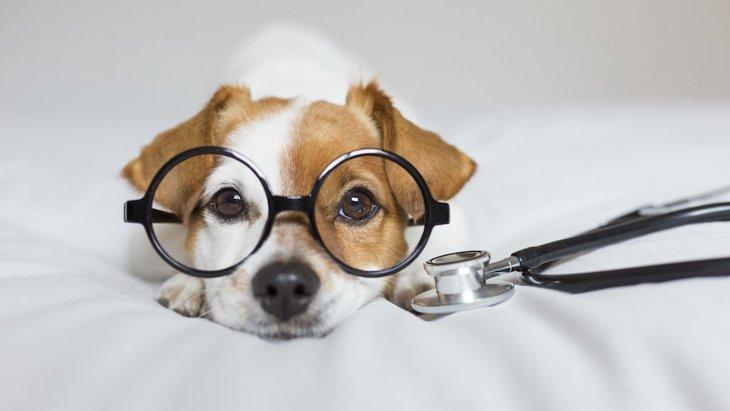 じつは怖い犬の歯周病!オーラルケアで愛犬の健康を守りましょう