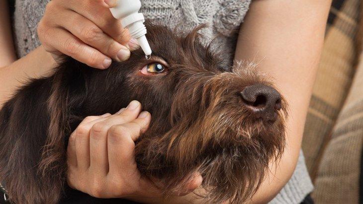 犬が目薬を嫌がる心理と対処法