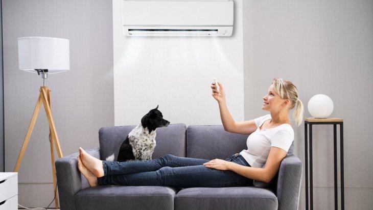 犬が『夏バテ』をしている時の症状3選!対処法と予防するための対策
