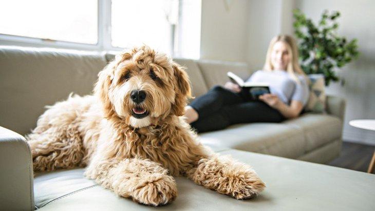 犬と飼い主の距離感が近すぎる時の悪影響3つ