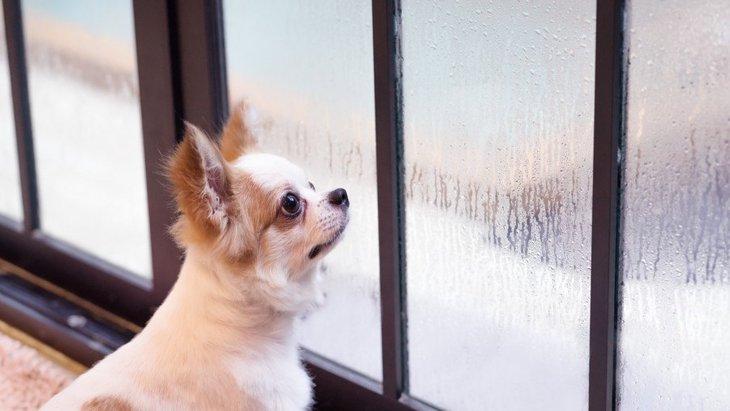 雨が降ると愛犬の元気が無くなるのはなぜ?