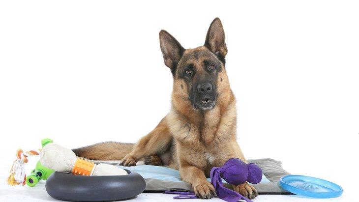 犬のおもちゃ、正しく使えていますか?うまく遊ばせるコツ5選