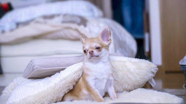 あるある!?犬が寝起きの時にする仕草5選