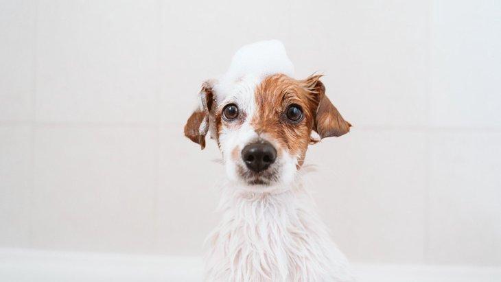 犬に『絶対NGなシャンプー』4選!間違った方法をしている可能性も?