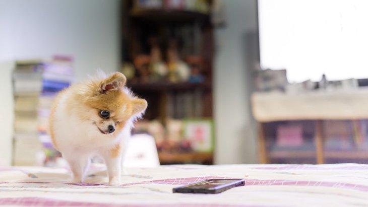 犬にしか聞こえない音を使ってしつけをする方法
