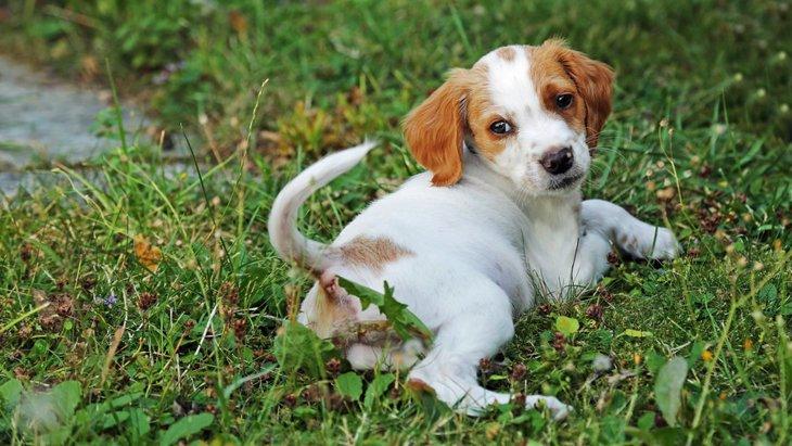 犬のしっぽで分かる喜び度