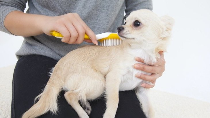 犬がブラッシングを嫌がる時の心理4選!やるべき対処法からNG行為まで解説