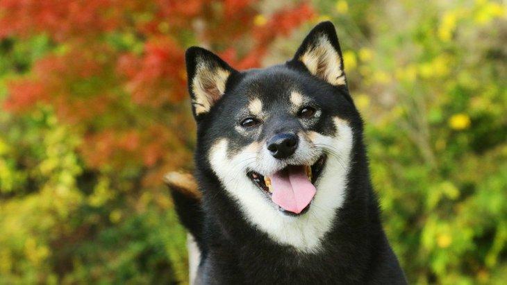 大きくならない犬で小型犬の人気ランキング10選!その種類の特徴や性格とは