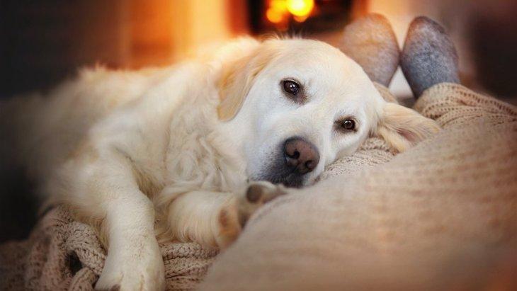 犬に『暖房』を使う時にしてはいけないNG行為5選