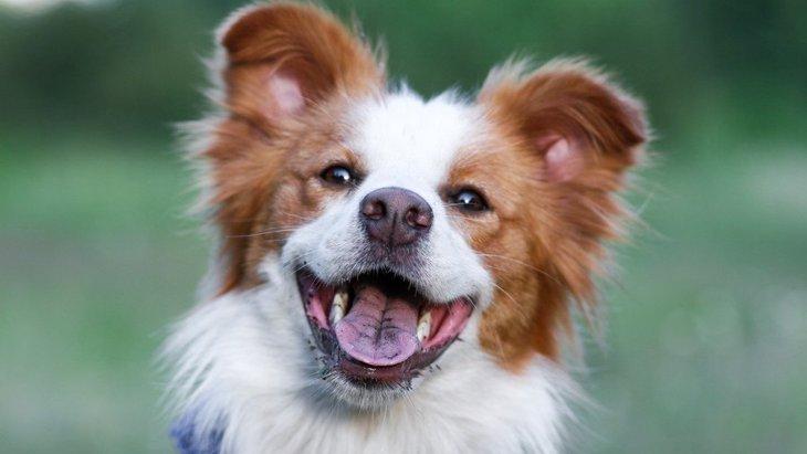 犬が『最高に楽しい♡』と思っている時にする仕草や表情5選