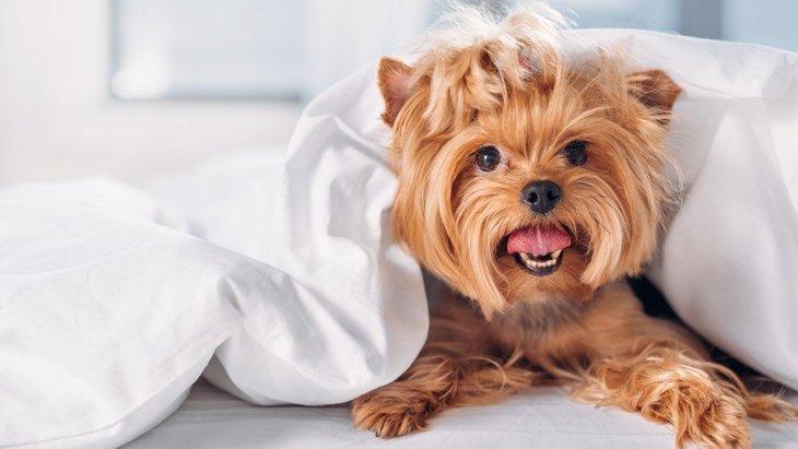 犬が他の部屋に行きたがる時の心理4つ