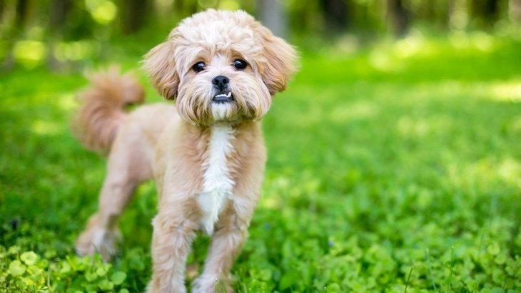 犬が安心する『声のトーン』はどのくらい?低い声を出すべきではないって本当?
