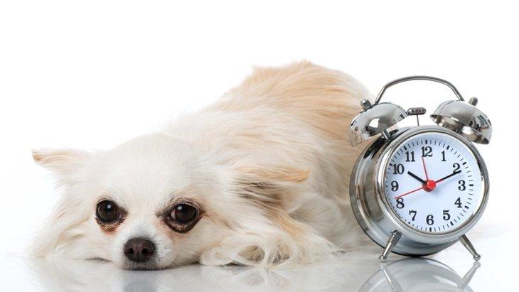 犬にも体内時計があるって本当?実はとっても正確なんです!