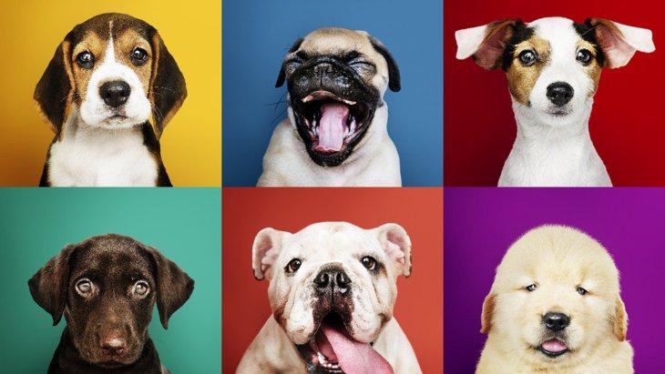 犬の『嫌いな色』って?2つの理由と選ぶべき色を解説