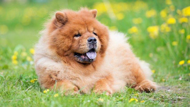 犬は『食べ物の味』を理解しているの?味覚や舌の構造を解説