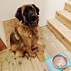 愛情たっぷり♡本日の愛犬用手作りゴハン!