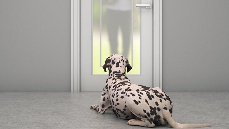 犬は何時間まで留守番できるの?NGな時間や帰宅後のケアを解説