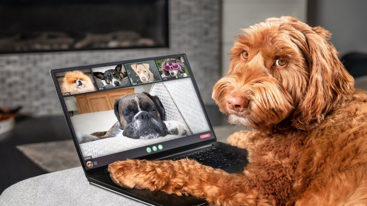 リモートワークの人向けの犬種って何だろう?